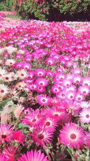能古島 Plant
