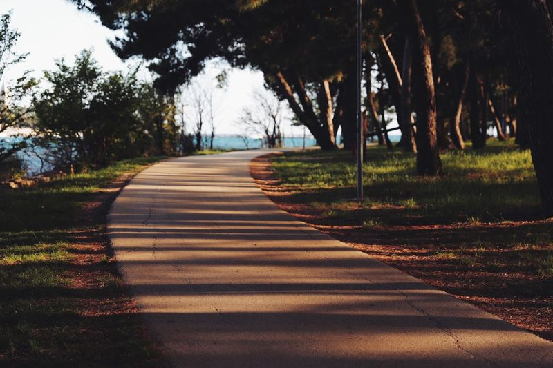 The road to seaside Shadows & Lights Seaside Summer Tree Plant Direction The Way Forward Road Nature Sunlight Transportation Shadow Diminishing Perspective Growth Tranquility No People Beauty In Nature Outdoors Day Footpath Tranquil Scene Land Symbol