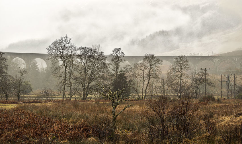 Nature Scotland 💕 Wooded Area Day Forrest In The Mist Man Made Structure Misty Mountains  Natures Colours No People Railway Bridge Daytime Tree Growth Tranquility Sky Tranquil Scene Landscape Beauty In Nature Outdoors Grass Scenics Fog Mountain Range Remote Idyllic Rocky Mountains Growing Foggy Countryside