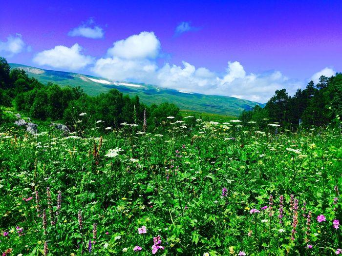 PhDianaSidorenko Di_S Nature Mountains Beautifulview Beautyinsimple Beauty