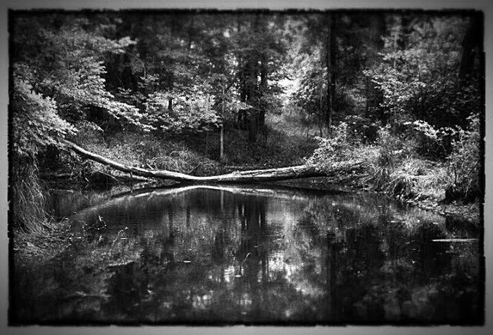Beyer's Pond Cle(a)veland Metroparks Beyer's Pond Nature Blackandwhite Outdoors Cuyahoga County Westside