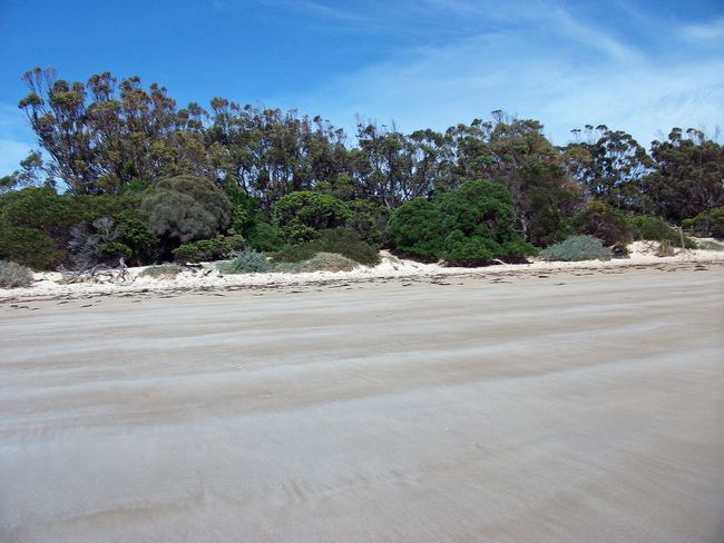 Waterhouse Conservation Area Beach Beauty In Nature Day Landscape Nature No People Outdoors Sand Scenics Sky Tranquil Scene Tranquility Tree