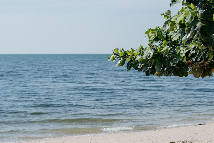 Beach and beautiful tropical ocean with a people private Wave. Holiday Nature Relaxing Skyline Vacations Blue Sky No People Private Beach Sandy Beach Sea Sky And Ocean Thailand Travel Tree By The Sea Tropical Ocean Waves, Ocean, Nature