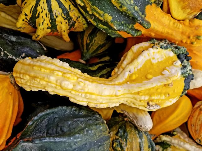 gourd Yellow Water Fruit Close-up
