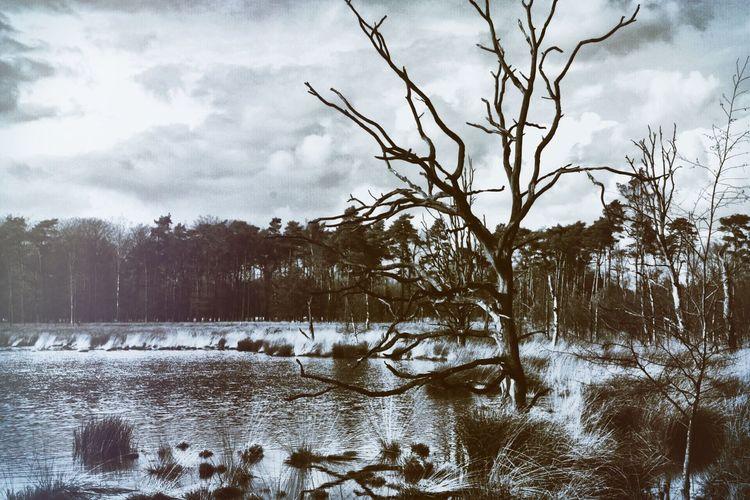 Nature Tree Sky