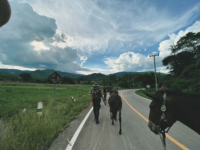 View of people riding horse on road