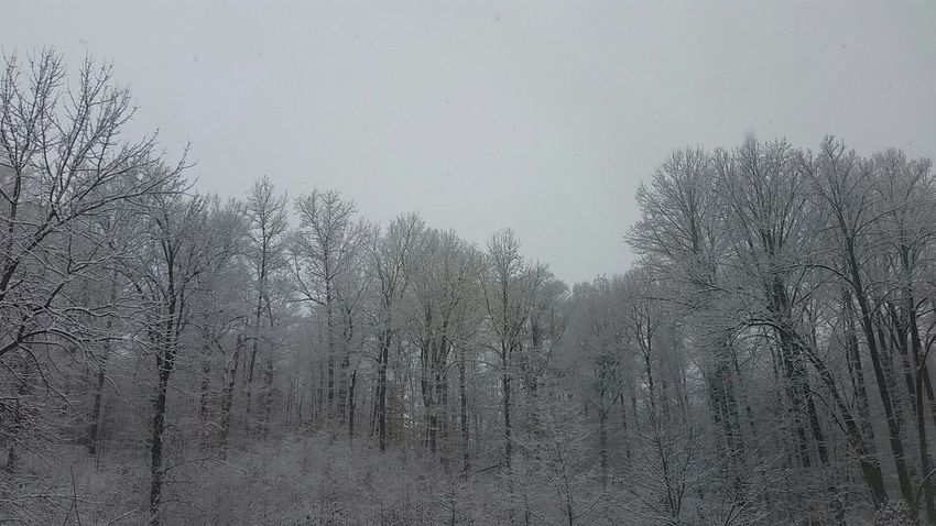 Winter Wonderland ❄ Winterwonderland Winter Trees Wintertime Winter Winter2017
