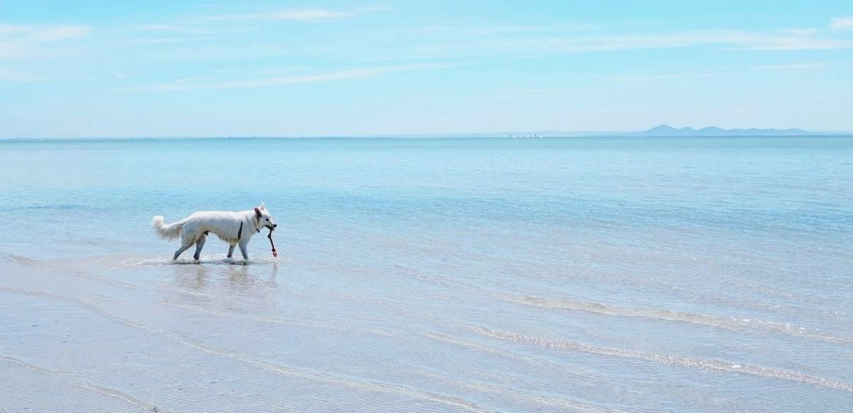 Dog Beach Pets Sea Outdoors Water Summer Horizon Over Water No People Beauty In Nature Animal Themes Animal Sand Domestic Animals Nature Landscape Day Beauty Sky Mammal first eyeem photo