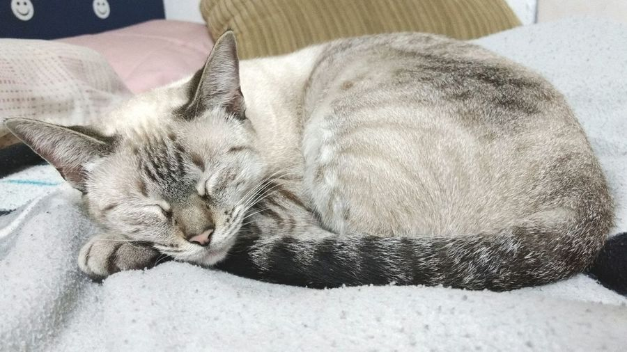 Animal Themes Relaxation Domestic Animals Feline Cat Domestic Cat