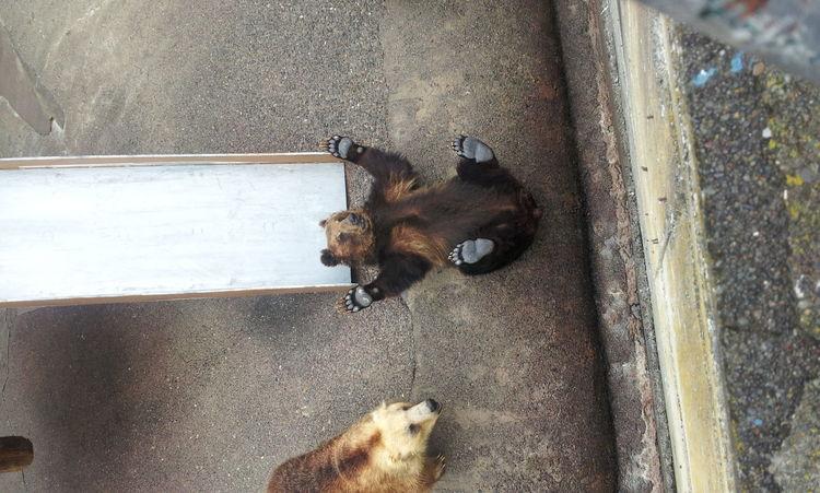 bear kuma Kuma Bear Cute Japan