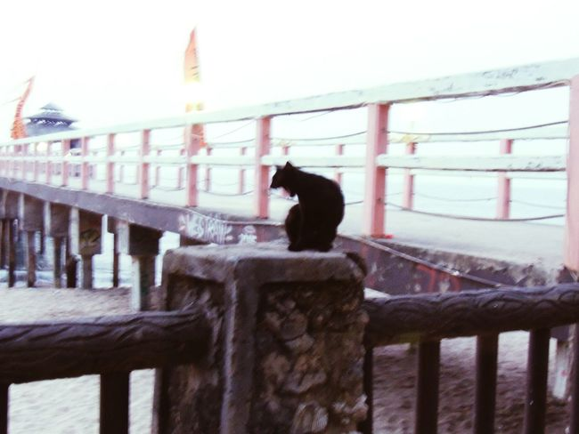 raja. who's king. INDONESIA Naturelovers EyeEm Nature Lover Nature_collection Pantai Anyer Anyerbeach First Eyeem Photo Cats Kitty Showcase: December Missions