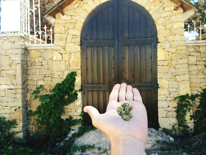 Cropped Image Of Hand Holding Herbs Against Closed Door
