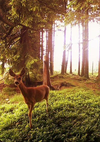 Forest Photography Nature One Animal Animals Animal Themes Animals In The Wild Nature Photography Forest