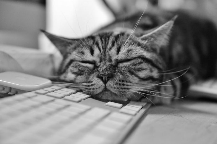Animal Themes Cat Day Domestic Animals Domestic Cat Feline Indoors  Kater Mammal No People One Animal Pause Pets S/w Schlafen Selective Focus Tastatur Trzoska Whisker