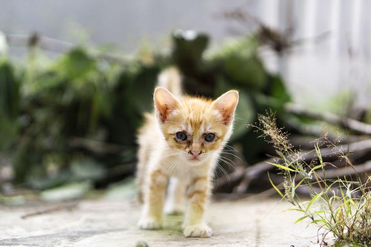 Portrait of kitten on cat outdoors