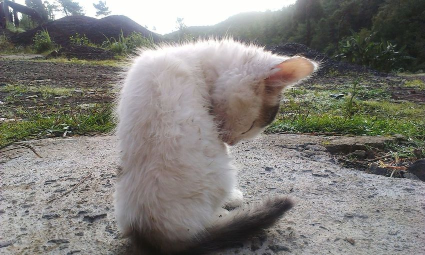 Early Morning Imrankhaan Pets Collection Cute Cats Cats Cat♡ This Week On Eyeem Check This Out EyeEm Best Shots Shillong Northeast India Shillong The Rock City EyeEm Best Edits EyeEm Nature Lover Imrankhaan Collection