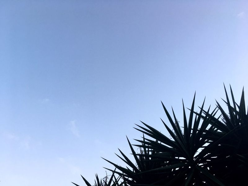 Palm Branch Holiday Feeling Copy Space Holidays Sky And Palm Tree Palm Tree And Sky Palm And Sky Blue Sky Clear Sky