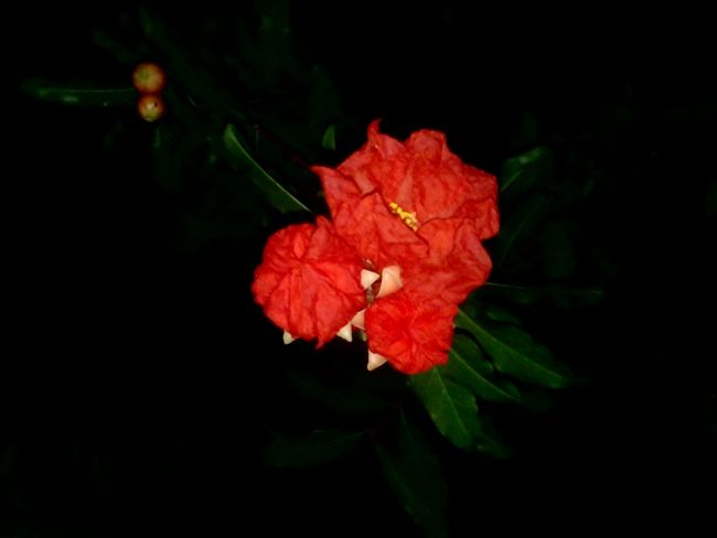 Red Flowers Nature In The Night Flower Photography Nature's Diversities Black Background Flower Collection