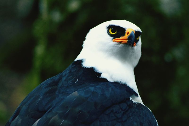 Hello Bird Animal Themes Birds Of EyeEm  Birds Quemiradamasintensa Intenso Mirada  Aves EyeEmNewHere TheWeekOnEyeEM The Great Outdoors - 2017 EyeEm Awards