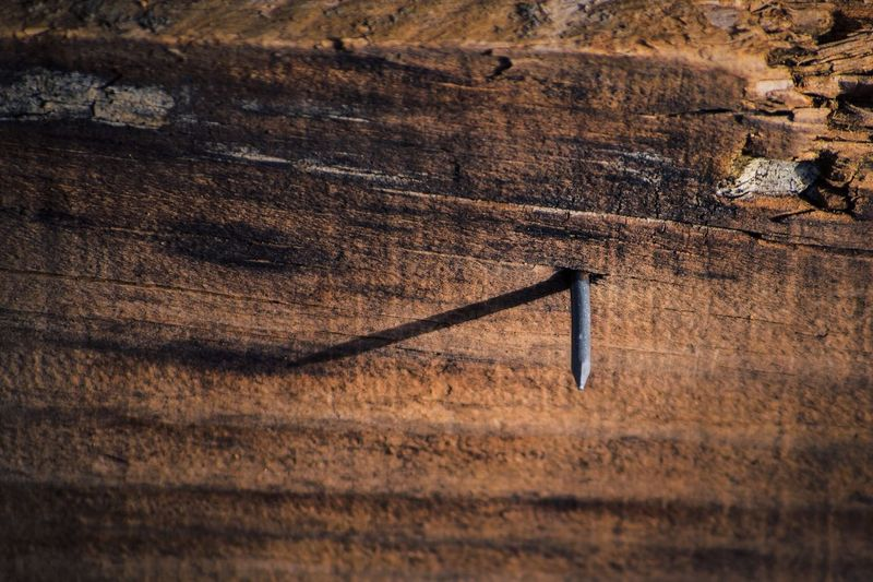 Close-up of nail in wood