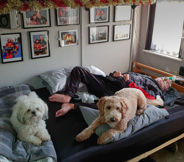 Dog Canine Domestic Pets Domestic Animals Indoors  Lying Down Mammal Home Interior