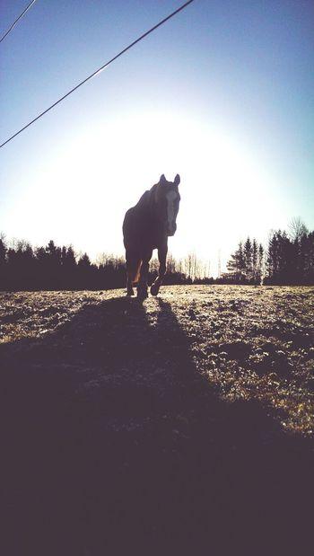 Horse Beautiful Morning