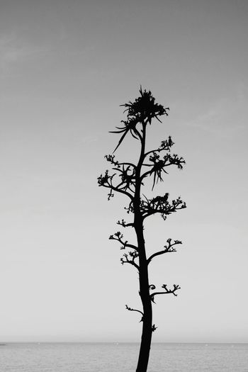 Tree in sea against clear sky