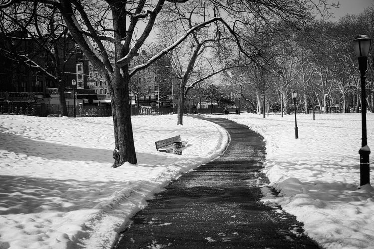 Snow free path through a park. Projectaz Path Park 365 Snow Black And White Trees