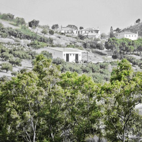 Greens Andalucía Campo ✨✨✨✨✨✨✨✨✨ Nikon Coolpix S6300