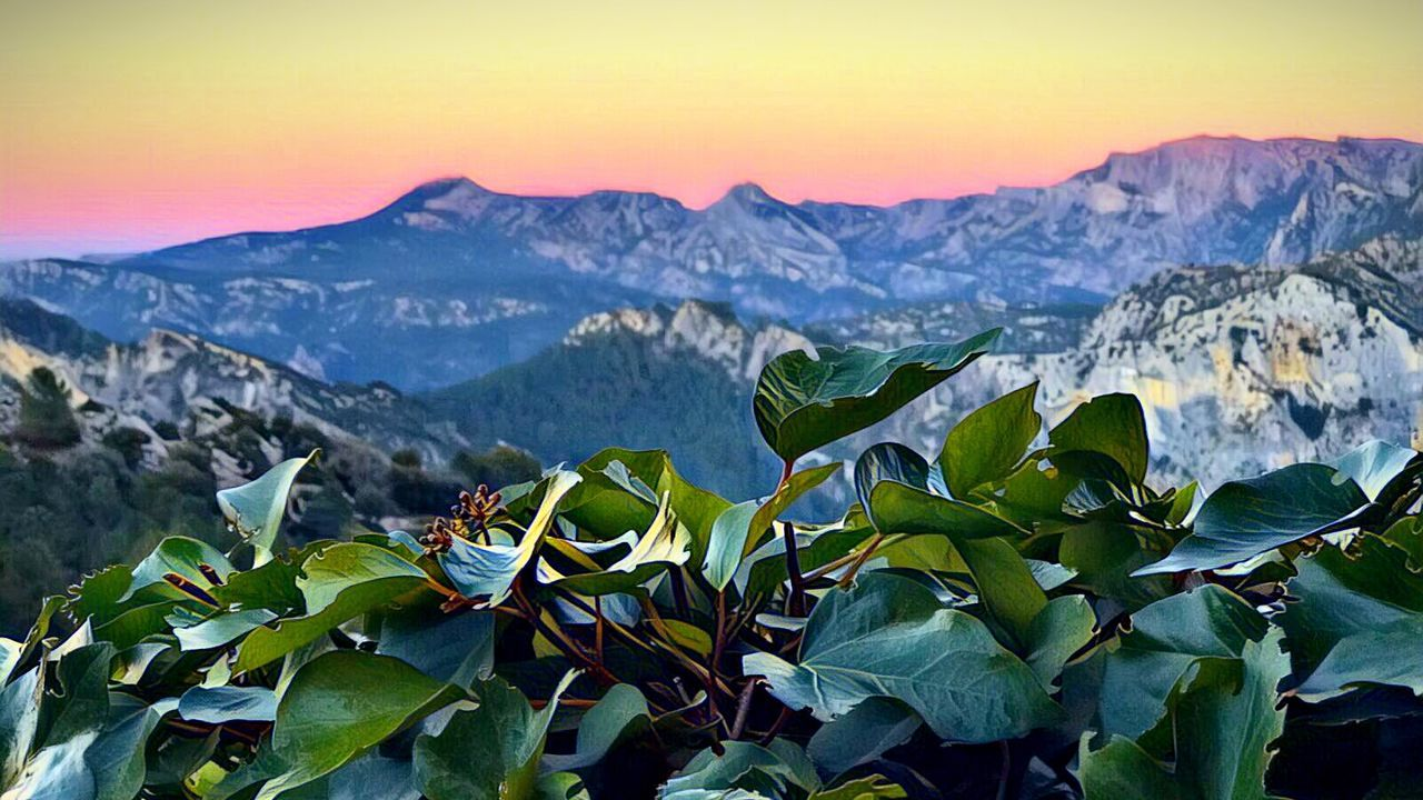 mountain, nature, scenics, beauty in nature, landscape, mountain range, no people, sunset, outdoors, leaf, mountain peak, tranquil scene, snow, tranquility, plant, sky, travel destinations, rural scene, winter, day, freshness, close-up