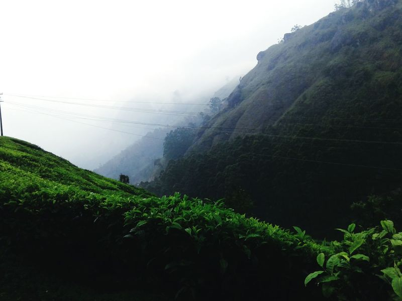 Fog Mountain Landscape Tea Crop Beauty In Nature Forest Lush - Description Freshness Nature Day Munnar Kerala Munnar Tea Estates Travel Destinations Travelphotography Mobile Photography Outdoors Sky Mountains Social Issues Environmental Conservation Rain Rural Scene Tree Agriculture Water