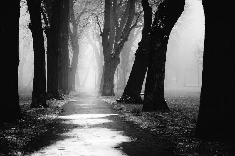 Dark way Creepy Forest Dark EyeEm Best Shots EyeEm Nature Lover Misty Mystic Nature Tree Winter Wood Black And White Blackandwhite Creepy Harz Monochrome Schwarzweiß Snow Wald Waldlandschaft Way