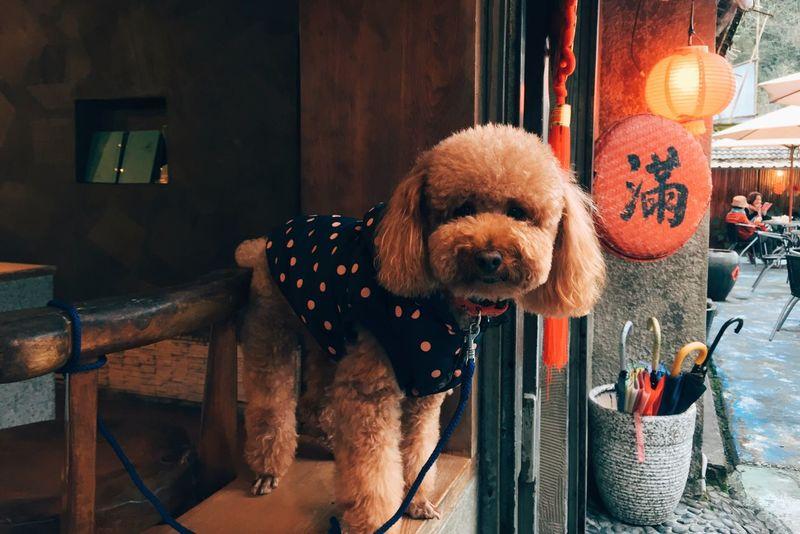 Q Dog Taking Photos Hanging Out Travel