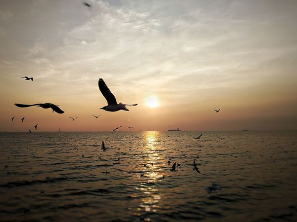 Bangpu Recreation , Samut Prakan province, Thailand ขอให้โลกนี้สงบสุข We Are The World Still Life Bird Flying Animals In The Wild Sunset Animal Wildlife Animal Themes Silhouette Flock Of Birds Spread Wings Large Group Of Animals Outdoors Water Seagull Lake Sky No People Beauty In Nature