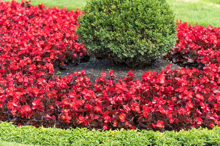 Red flowering plants in garden