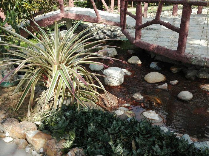 :) Palm Trees