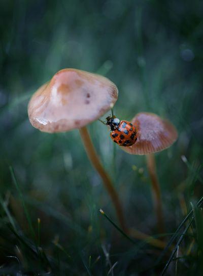 Close-up of ladybug on mushroom