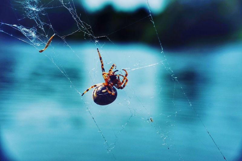 Spider Web Spider Animal Themes One Animal Fragility Invertebrate Animals In The Wild Arachnid Insect Animal Wildlife Close-up Animal Arthropod Focus On Foreground Nature No People Day Animal Body Part Vulnerability  Survival