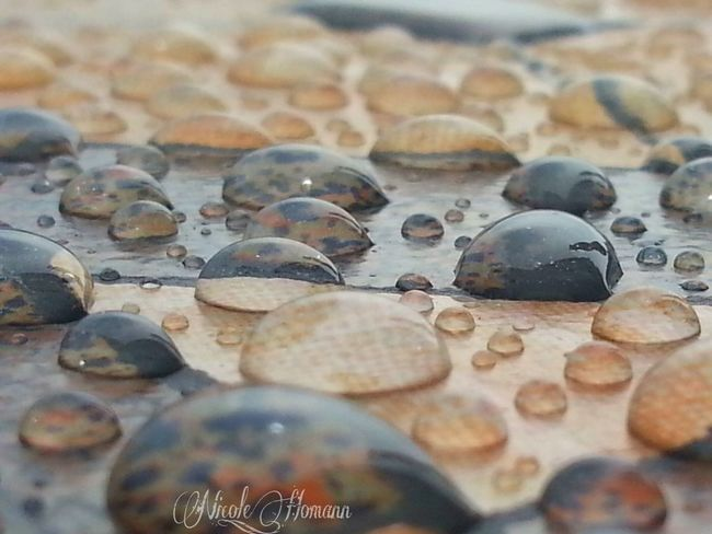 Raindrops Water_collection Nature_collection EyeEm Nature Lover