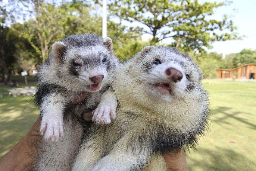 Ferret Animal Themes Animals In The Wild Animal Wildlife EyeEm Selects Animal Exotic Tree Close-up Pets
