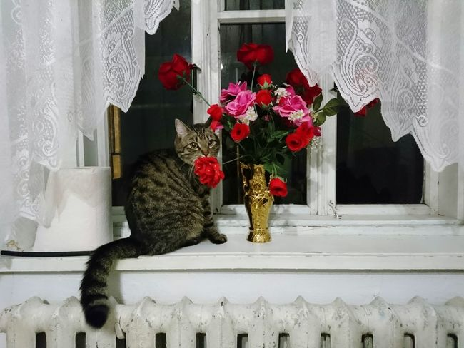 Pet Portraits Animal Themes No People Domestic Animals Portrait One Animal Pets Domestic Cat Flower Day Indoors
