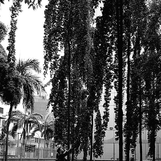 Not seen Trees like this before with Long Soft Branches Nature Singaporenature Urbannature Tiong Bahru Singapore Bnw_city Bnw_sg Bnwsingapore Bnw_collection Bnwphotography that's me