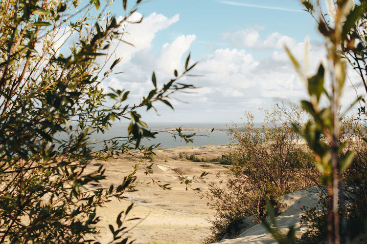 Curonian Spit Desert Lietuva Lithuania Beach Beauty In Nature Cloud - Sky Day Environment Growth Land Landscape Nature Nida No People Outdoors Plant Scenics - Nature Selective Focus Sky Sunlight Tranquility Tree Water