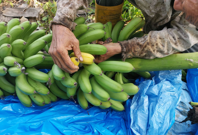 Full frame shot of fresh vegetables for sale at market stall