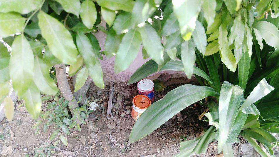 Paint Box Near Plants Gardening No People Leaves🌿 Beauty In Nature In Its Place Mobile Photography Outdoors Day SSClicks SSClickpix SSClickPics