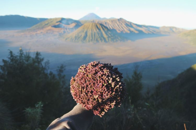Cropped hand of person holding plant on mountain against sky