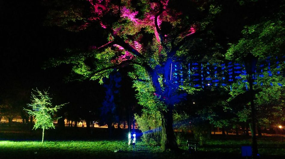 Light Move Festival Łódź City Lights Colors Of The Night Night Neons