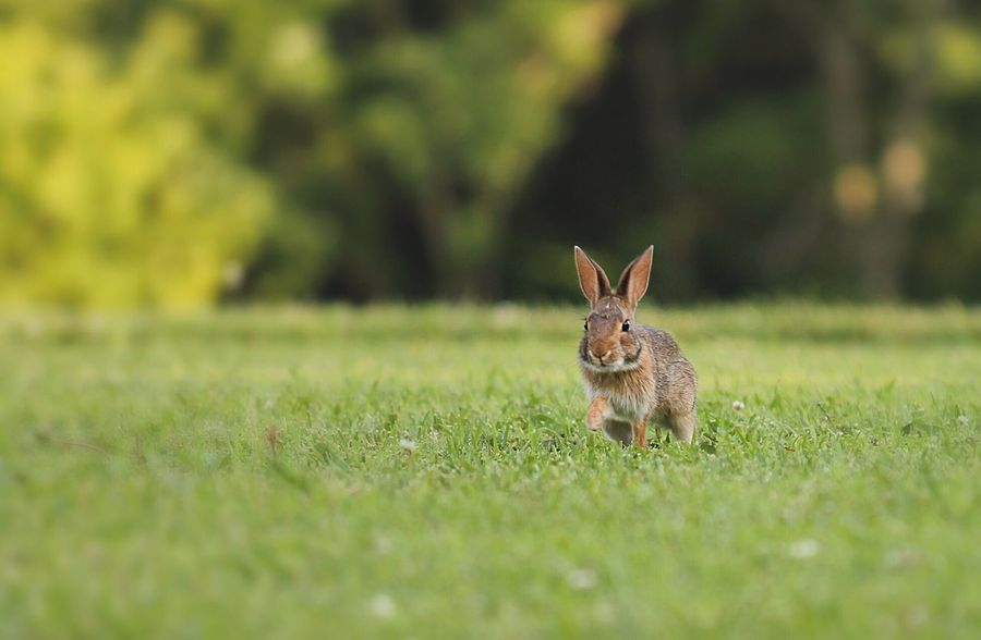 Bunny  Rabbit Animal Animals Animal Photography Nature Nature Photography Canon Cute Tennessee
