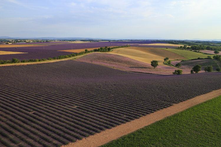 SCENIC VIEW OF RURAL Lavender LANDSCAPE