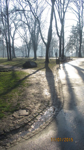 Bare Tree Bare Trees Blue Sky Branch Day Grass Landscape Lonely Park Nature No People No People Outdoors Outdoors Outside Park Seasons Changing Shadow Shadows And Lights Shadows On The Ground Sunlight Sunlight Sunlight And Shadow Text Tree Tree Trunk Water On The Ground